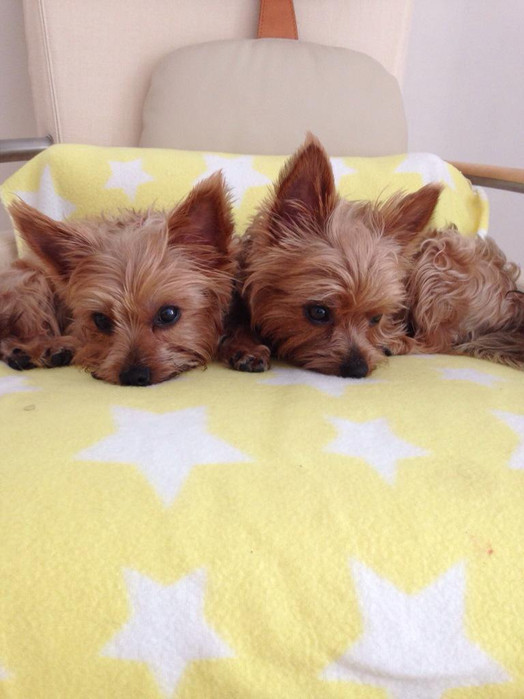 Simon Cowell's dogs Squiddly and Diddly as puppies
