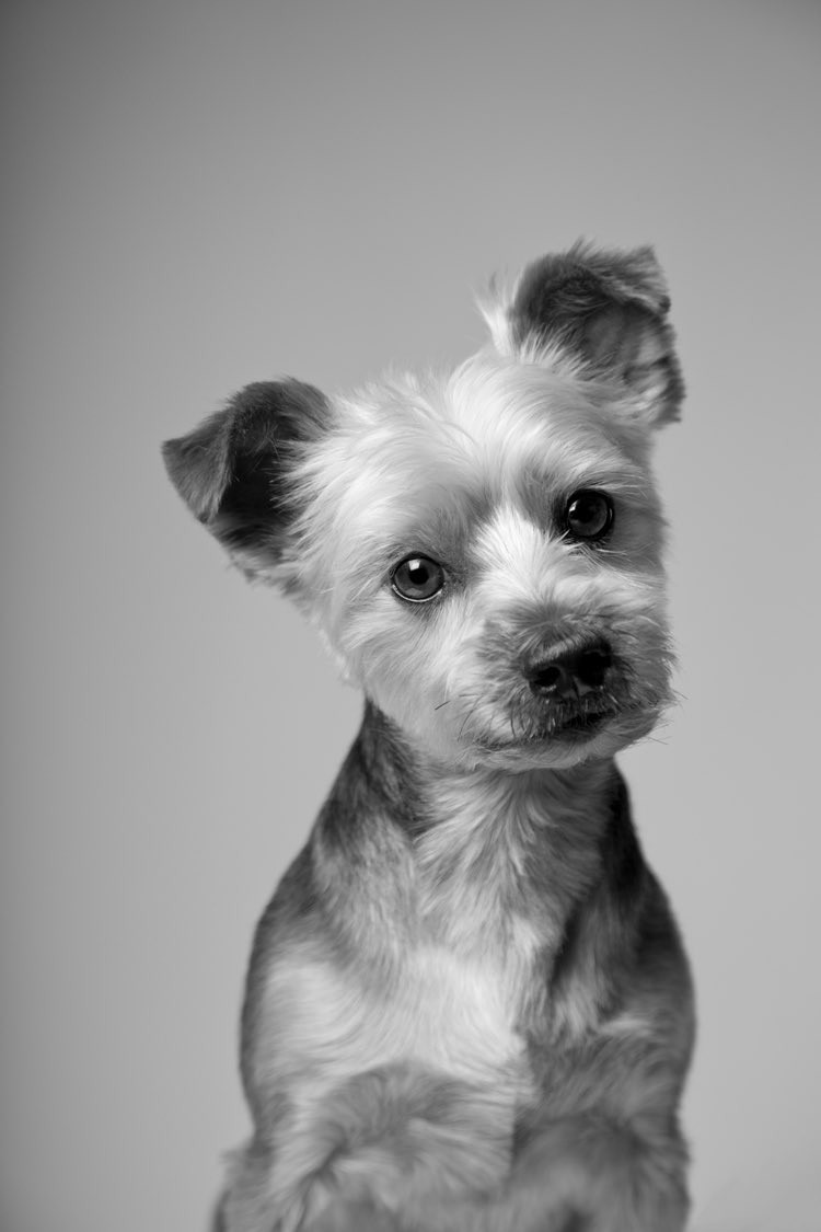 Simon Cowell's dog Freddie