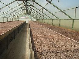 Kakaogtrocknung.JPG