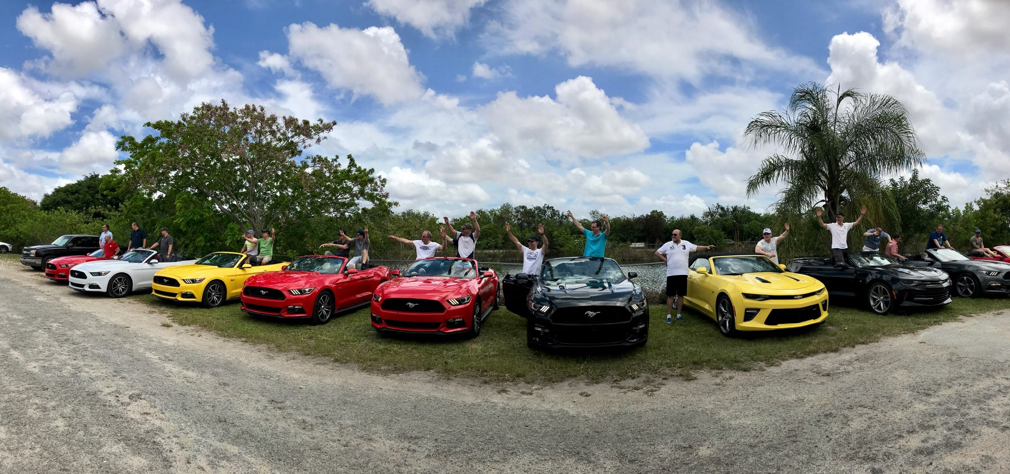 everglades with mustangs (2)