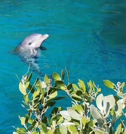 Dolphin Bahamas