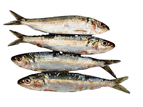 Pre-frozen Sardines (Small and Medium size)