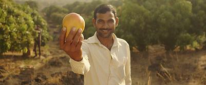 Mango farmer India.png