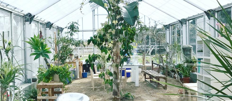 犬島生活的植物園