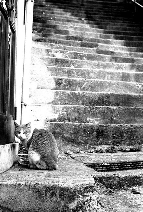 CAT-004.jpg
