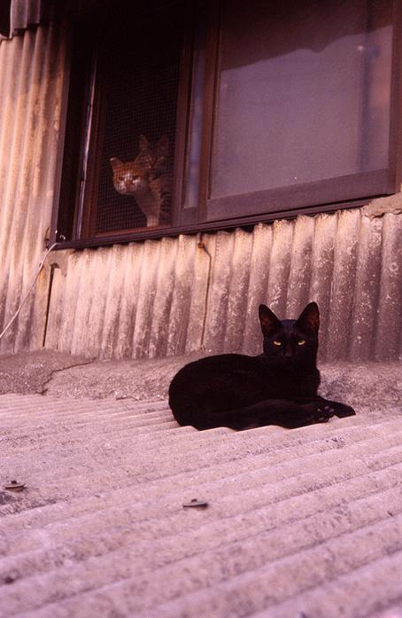 CAT-009.jpg