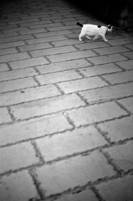 CAT-018.jpg