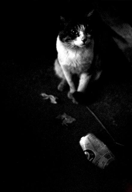 CAT-001.jpg