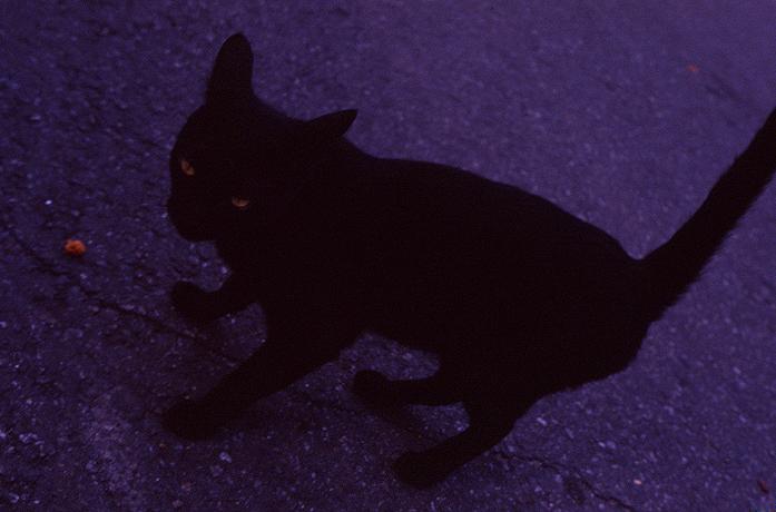 CAT-007.jpg