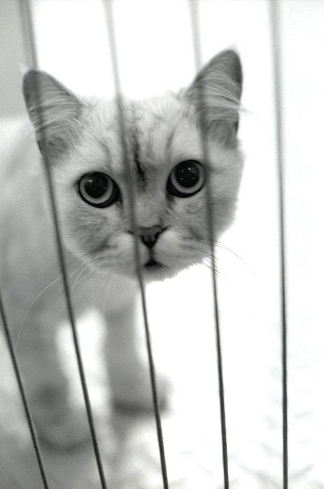 CAT-017.jpg