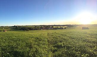 Sommerlandschaft.jpg