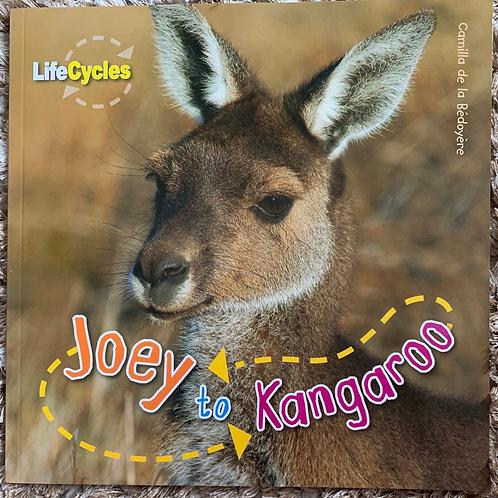 Life Cycles - Joey to Kangaroo