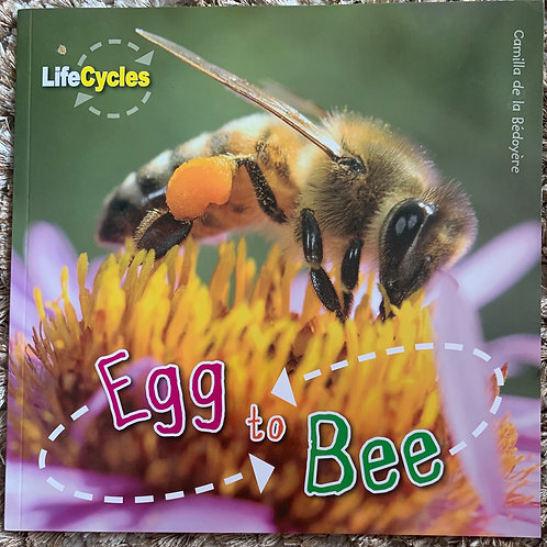 Life Cycles - Egg to Bee