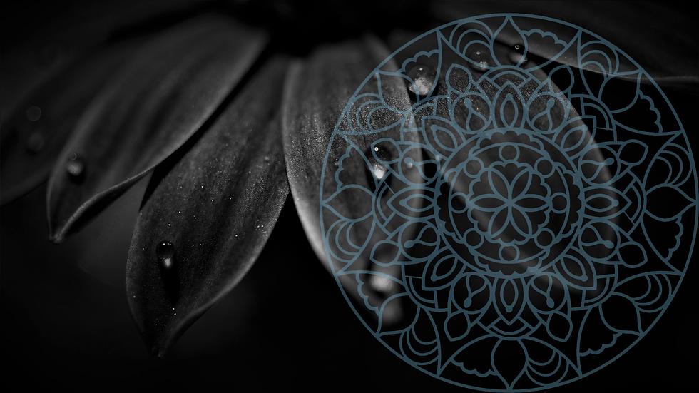petals-5100957_1920.psd v3.png