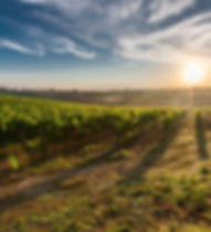 vineyard Sydney, Hunter Valey, Kangaroo Valley
