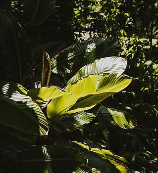 sydney royal botanic garden.jpg
