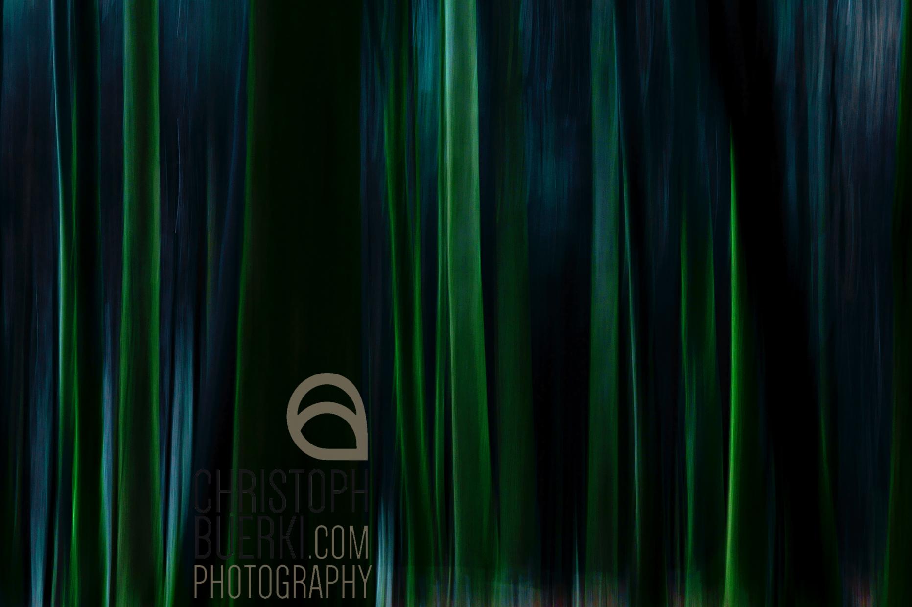 dark green trees