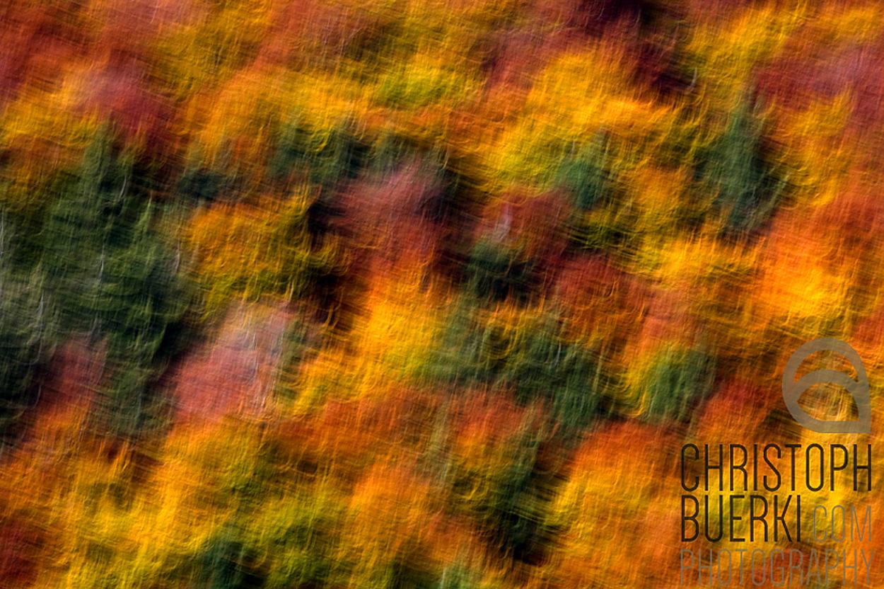 blurred autumn forest