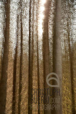 sun and forest