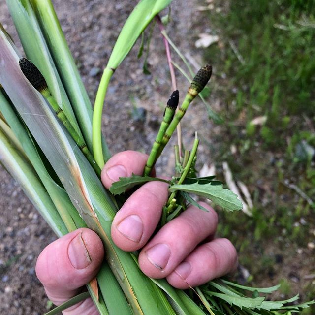 Fist full of foraging