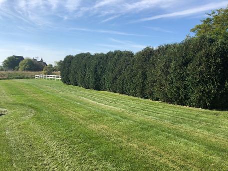 Fence & Trees