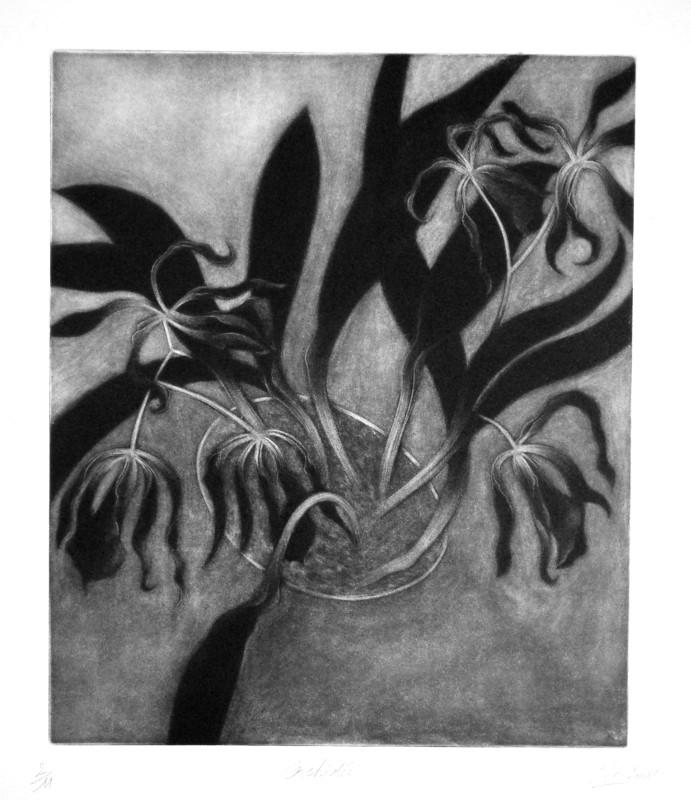 Orchidée2