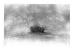 Pluie et bosquet