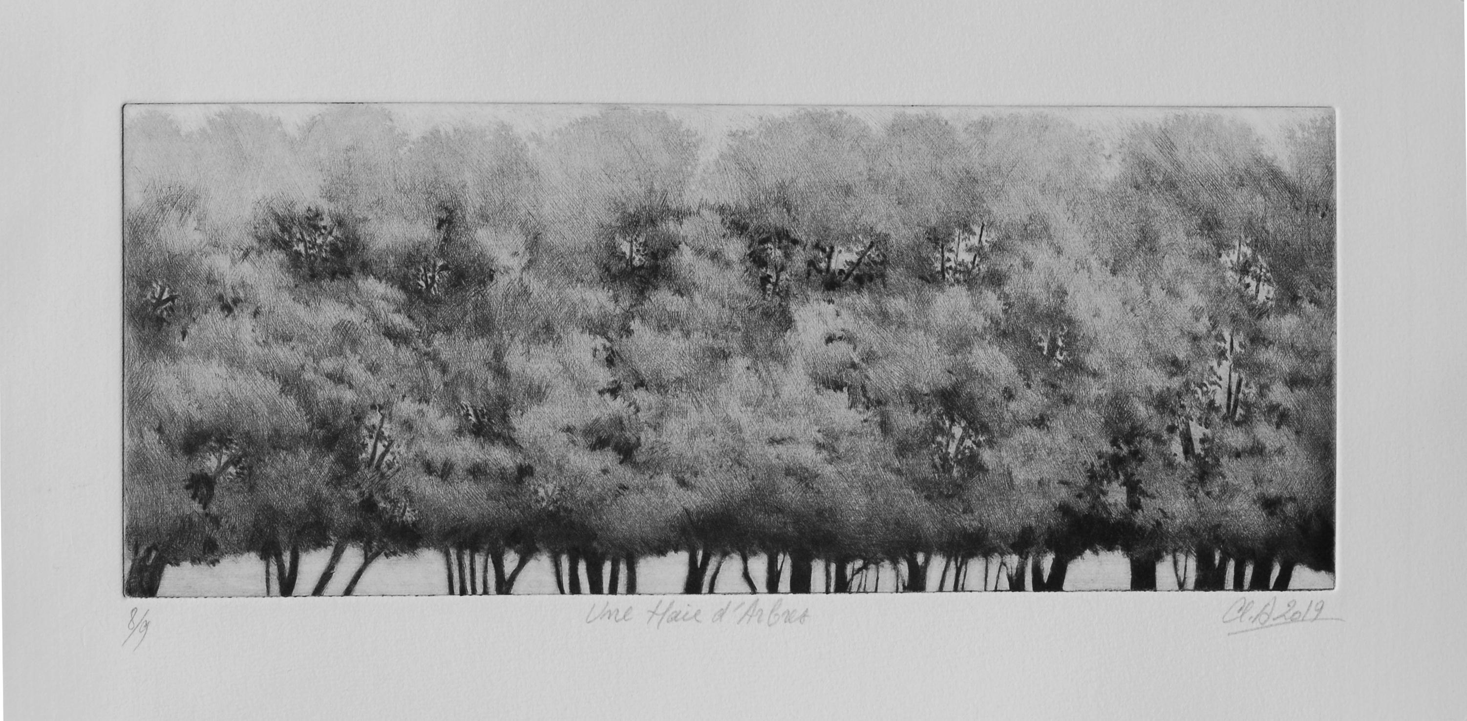 Une haie d'arbres
