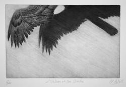 l'oiseau et son ombre
