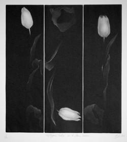 Triptyque tulipe