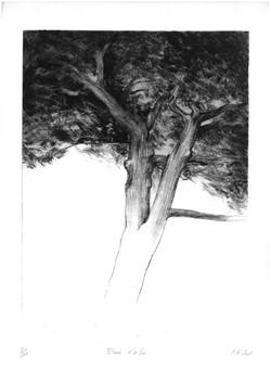 Etude d'arbre