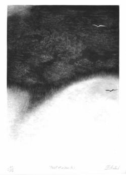 Forêt et Oiseau