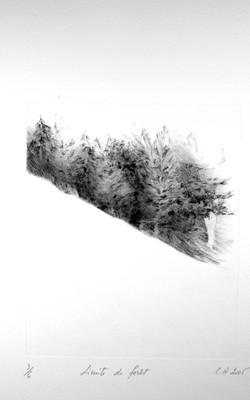 Limite de forêt