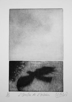 l'ombre de l'oiseau