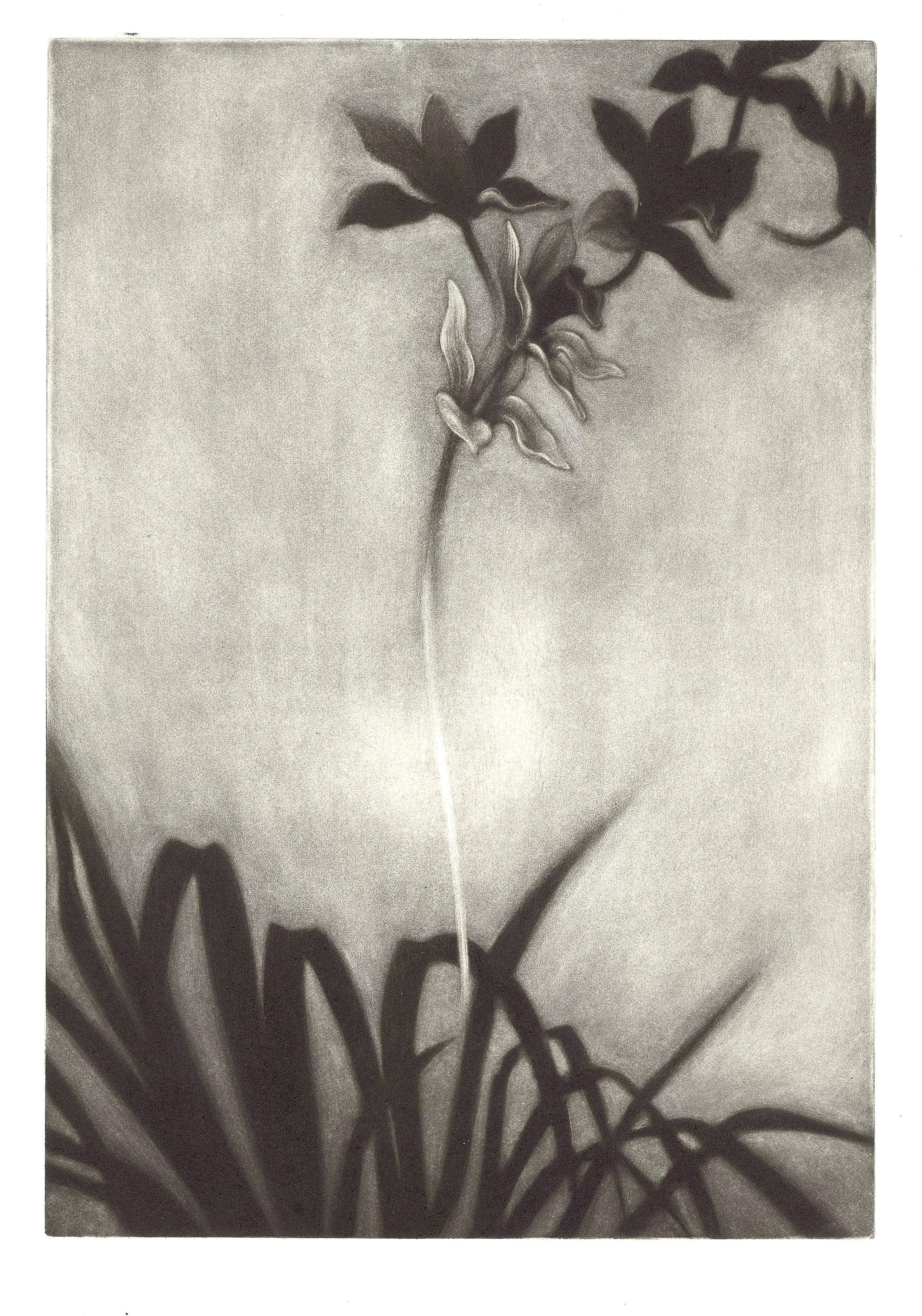 Orchidée1