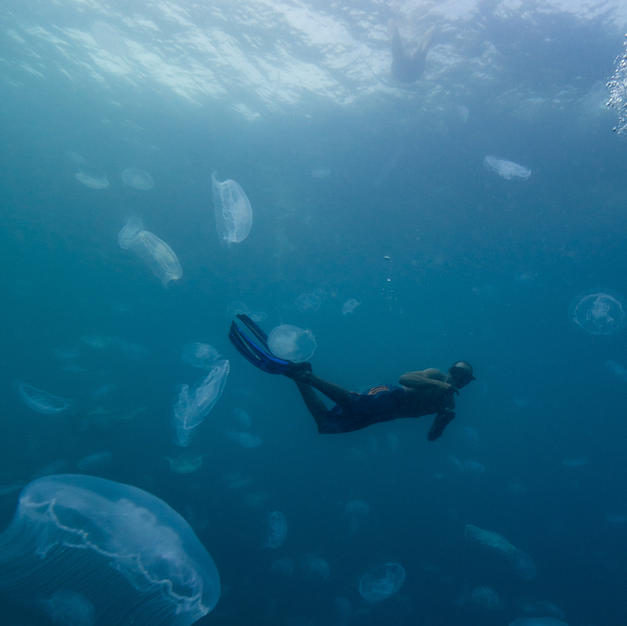Our friend Lapex swimming with stingless jelly fish in Gam Bay