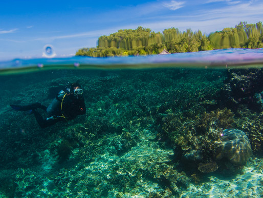 Turn Your Passion Into a Profession: Become a Divemaster in Raja Ampat