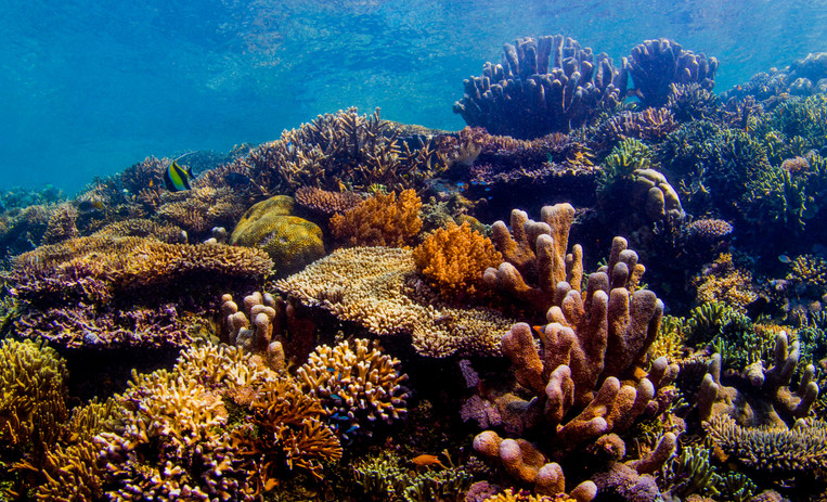 Healthy, diverse coral reef. Photo by John Haskew.