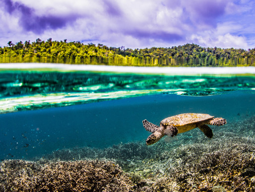 5 Reasons Raja Ampat Should Be First on Your Scuba Diving Bucket List