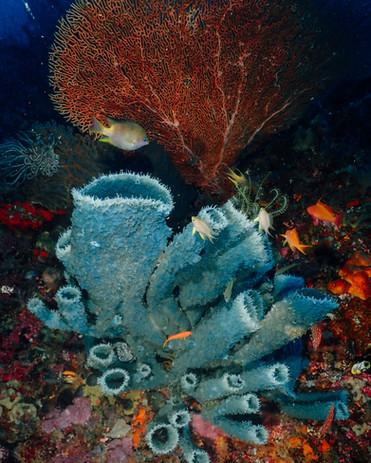 Coral in Raja Ampat. Photo by @tygeronix.