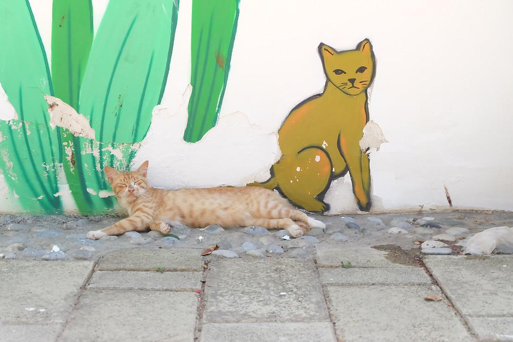 #straycat #nicosia #lefkosa #cyprus #gatto #cat #northcyprus