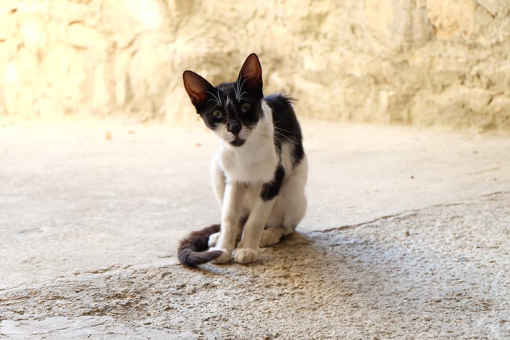 #cat #cyprus #straycat #paphosarea #ilmezzolabrador #gatto