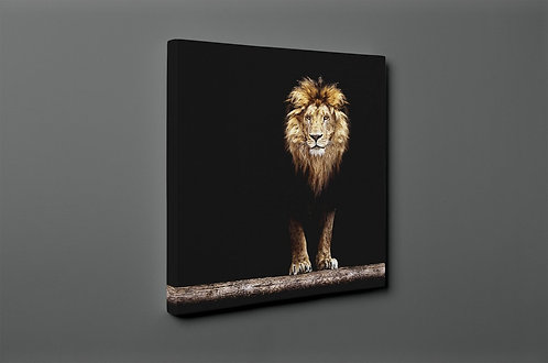 Lion Canvas Printings