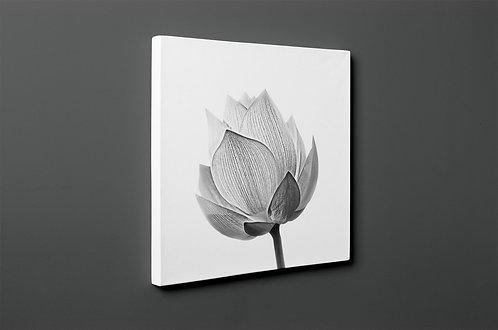 Flower Canvas Printings
