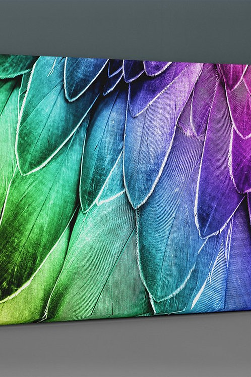 Colorful Feather Canvas Printings
