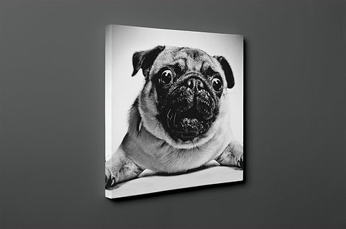 Pugs Canvas Printings