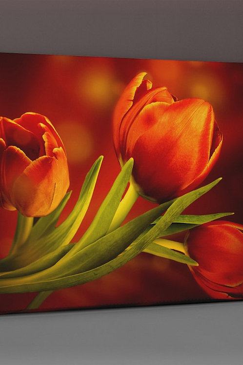 Tulip Canvas Printings