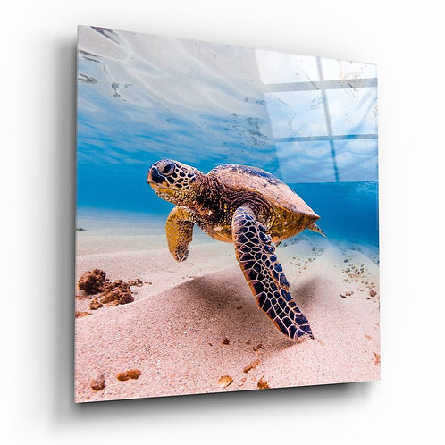 Sea Turtle UV Printed Glass Painting