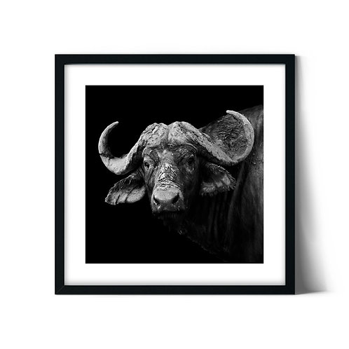 Bison Framed Painting