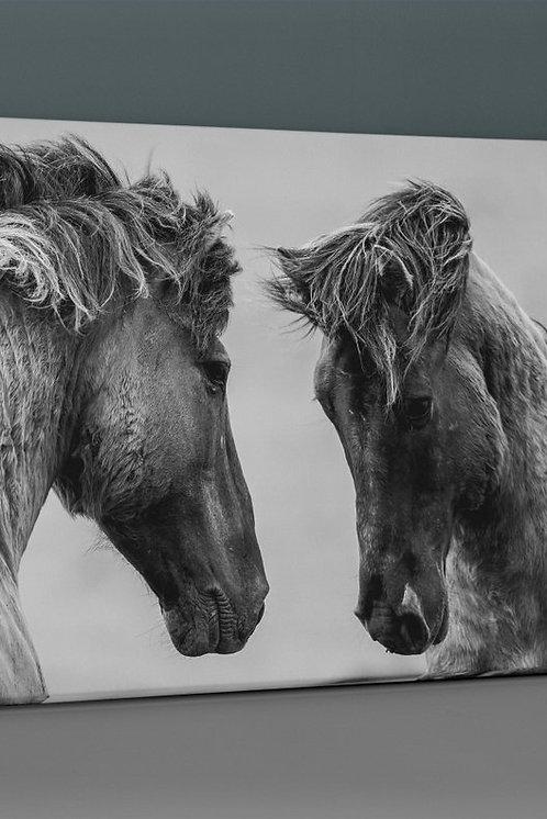 Horses Canvas Printings